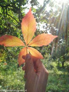 Tegenlicht in het bos - met lensreflecties