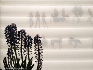 Tegenlicht vanaf buiten met een plant voor het raam en plakplaatjes op het raam, achter het gordijn