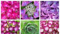 Diptic – maak mooie foto-collages met je telefoon