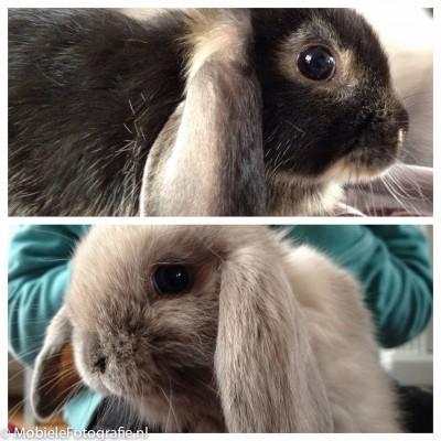 Collage van konijnen gemaakt in Diptic