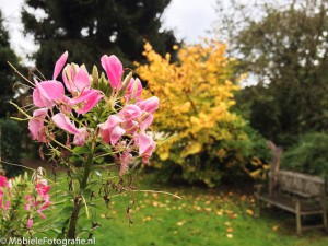 Smartphone foto van onscherpe gele bloemen door de scherpe roze bloemen op de voorgrond.
