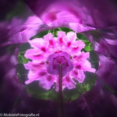 Foto van bloemen - gefotografeerd door de kaleidoscoop.