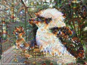 Een foto van een kookaburra vogel na een DeepDream bewerking.