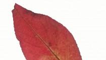 Herfstblaadjes fotograferen met je mobiele telefoon (en een tablet)
