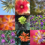 Layout collage van planten en bloemen.