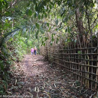 Foto van Wandelaars op een tropisch bospad. [iPhone 6]