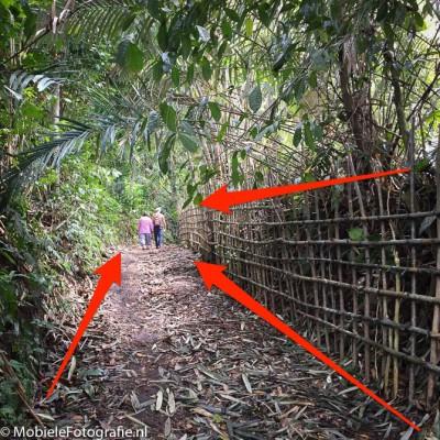 De lijnen langs het hek en het bospad leiden je blik naar de wandelaars in de verte.