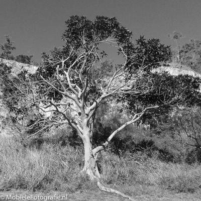 De automatisch omzetting naar zwart-wit door Snapseed.