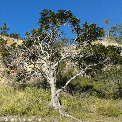 De originele kleurenfoto van een boom. [Samsung Galaxy Trend]