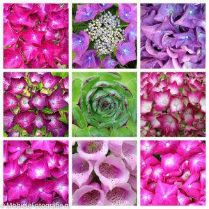 Bloemencollage, gemaakt met Diptic app.
