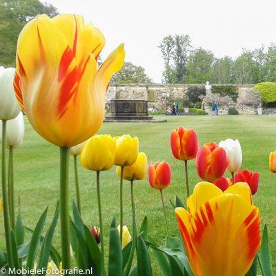 Bloemen fotograferen van dichtbij geeft een vage achtergrond. [Samsung Galaxy Trend]