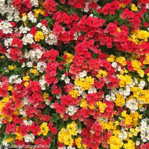 foto van Bloembak vol met kleine bloemetjes. [iPhone 6]