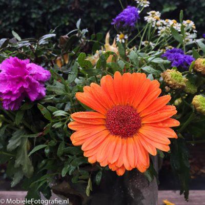 Door dichterbij te gaan staan is de bloem zo groot in beeld gebracht dat duidelijk is dat deze het onderwerp is.