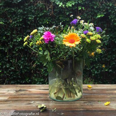 Als de oranje bloem het onderwerp is op deze foto dan is dat niet duidelijk.