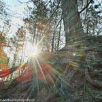 HDR foto van zonsopkomst in het bos [Samsung Galaxy Trend met HDR Camera app]