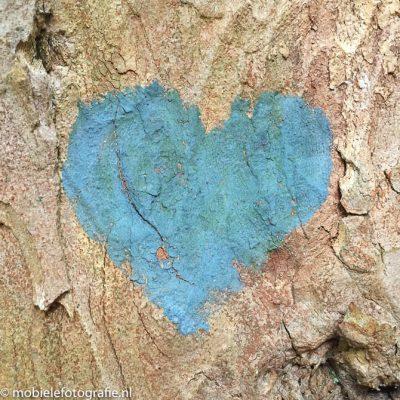 De mooie textuur van een boomschors [iPhone6]