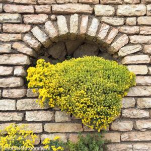Foto van Textuur op een deel van je foto (de muur). [iPhone 6]
