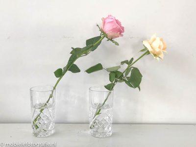 Regel van de oneven aantallen: mobiele foto van twee bloemen. [iPhone 7]