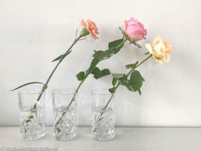 Regel van de oneven aantallen: mobiele foto van drie bloemen. [iPhone 7]