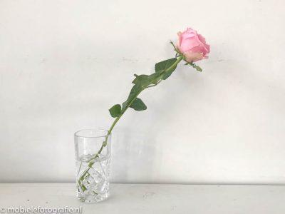 Regel van de oneven aantallen: mobiele foto van een bloem. [iPhone 7]
