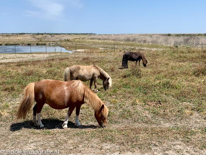 Oneven aantallen: drie paarden op Ile de Re (Frankrijk)